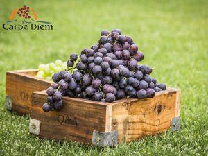 Business | Agriculture | Carpe Diem
